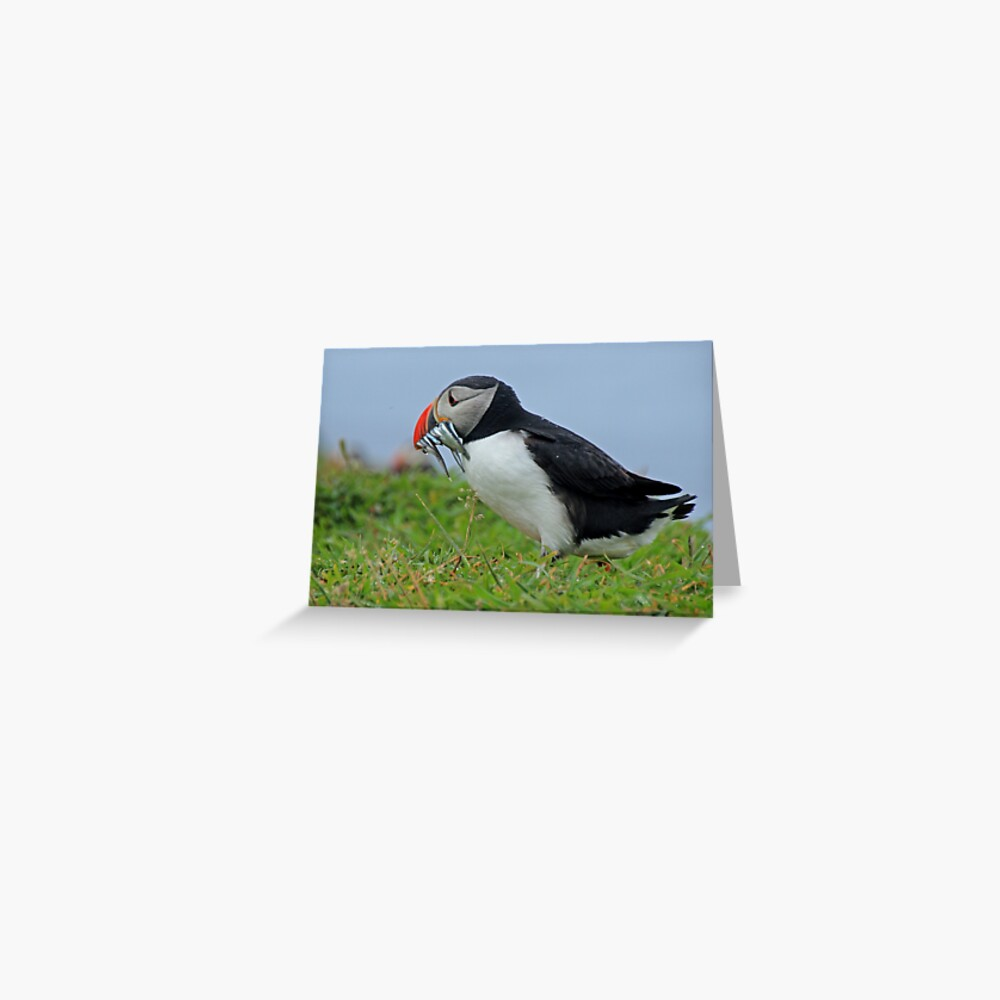 Peckish puffin Greeting Card