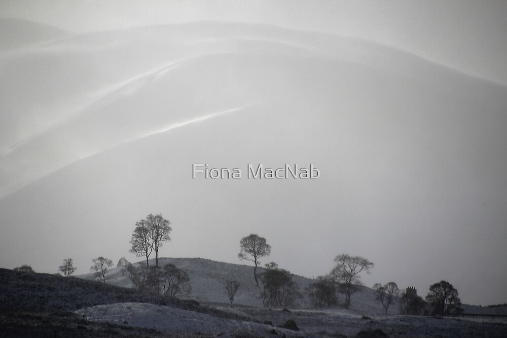 White by Fiona MacNab