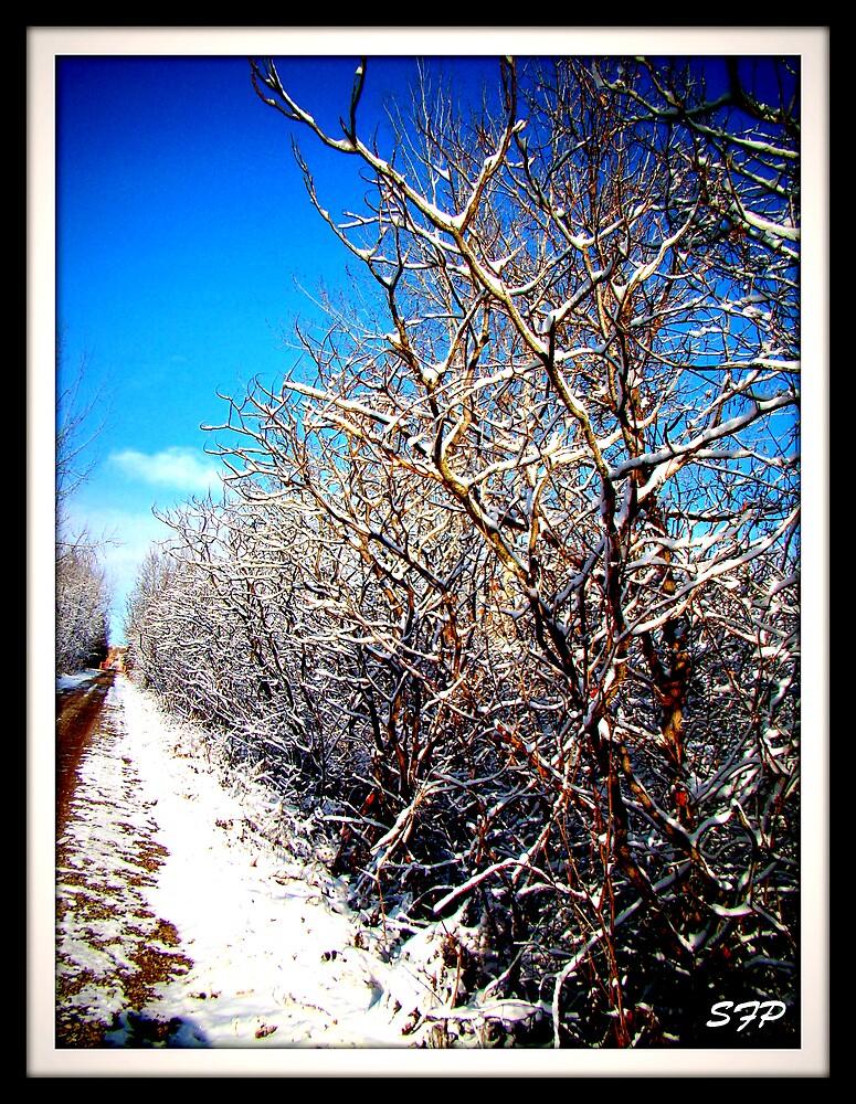Winter Lane by stafoste