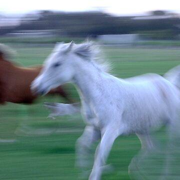 Horses - Australia by davispowell