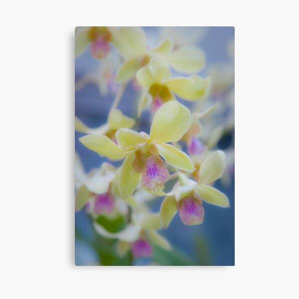 Orchids... Canvas Print