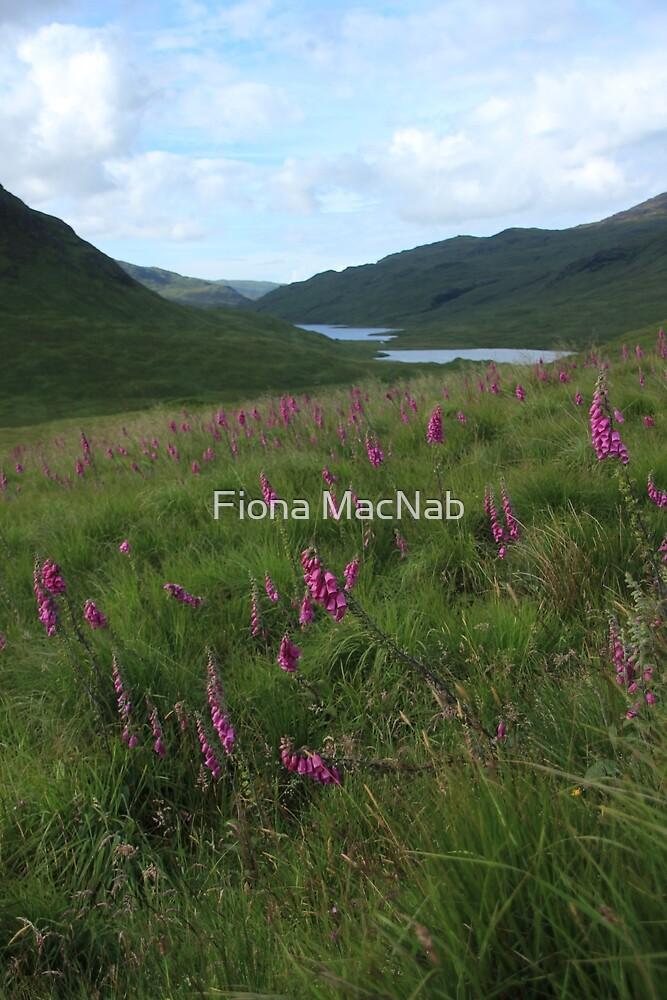 Field of foxgloves II by Fiona MacNab