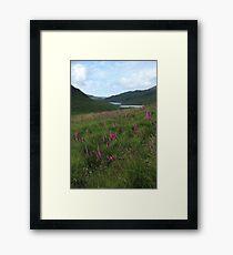 Field of foxgloves II Framed Print