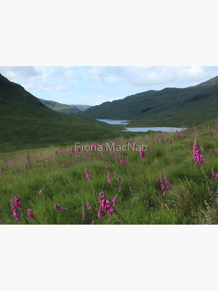 Field of foxgloves I by orcadia