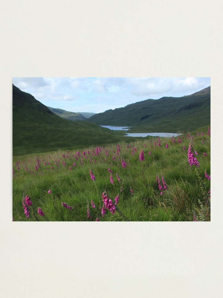 Alternate view of Field of foxgloves I Photographic Print
