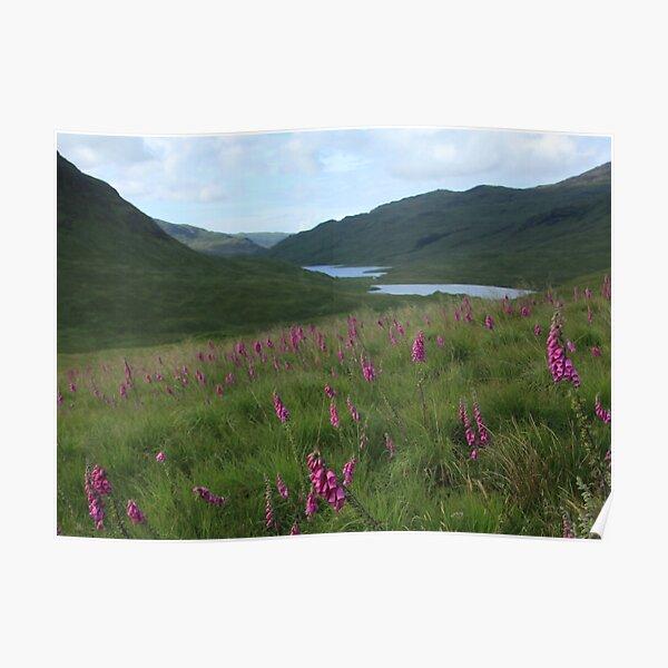 Field of foxgloves I Poster