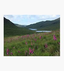 Field of foxgloves I Photographic Print