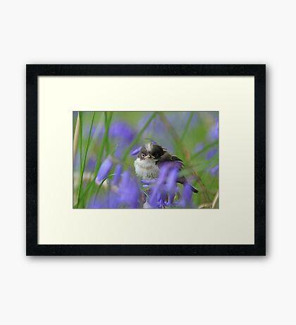 Bird in the blue Framed Print