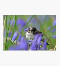 Bird in the blue Photographic Print
