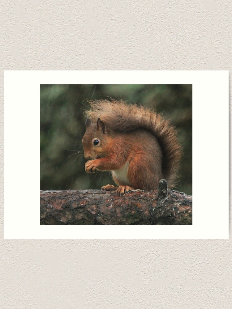 Alternate view of Squirrel shelter Art Print