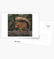 Squirrel shelter Postcards