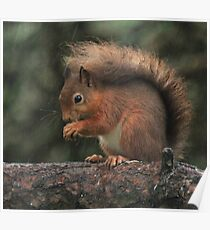 Squirrel shelter Poster