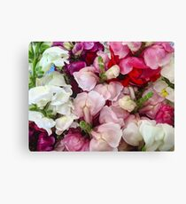 Snap Dragons Canvas Print