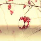 Winterzeit mit roten Hagebutten by Aviana