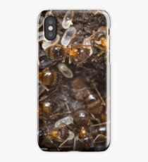 Red Ants Eggs iPhone Case/Skin