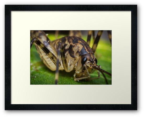 Closeup Cave Cricket by ezumeimages