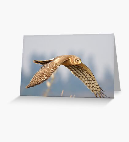 Eye on the Prize Greeting Card