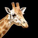 Giraffe - Just perfect by tracyleephoto