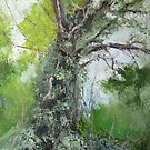 Old Tree by Geraldine M Leahy