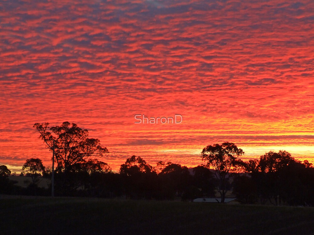November Sunset by SharonD