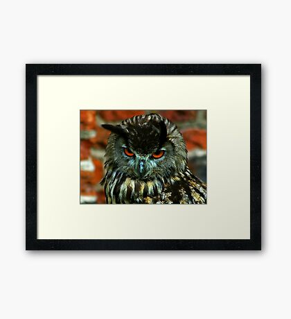 Orange Eyes Framed Print