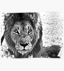 "Antelope Park, Zimbabwe: ""Echo"" Poster"