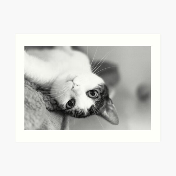 Cute cat upside down Art Print