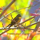 Autumn Pastels by K D Graves Photography