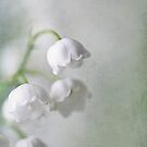 Lily of the Valleys by AnnieSnel