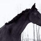 Kieran & Winter Trees by Katelyn Stephenson