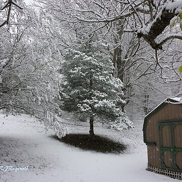 """""""Early December Snow"""" by Dloneger"""