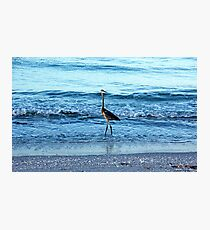 Early Morning Heron Beach Walk I  Photographic Print