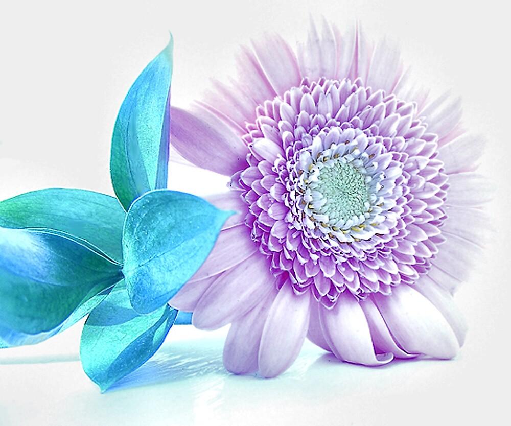 Lilac-Blue by PandJ