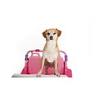 Terrier Dog in Pink Car by Susan Gary