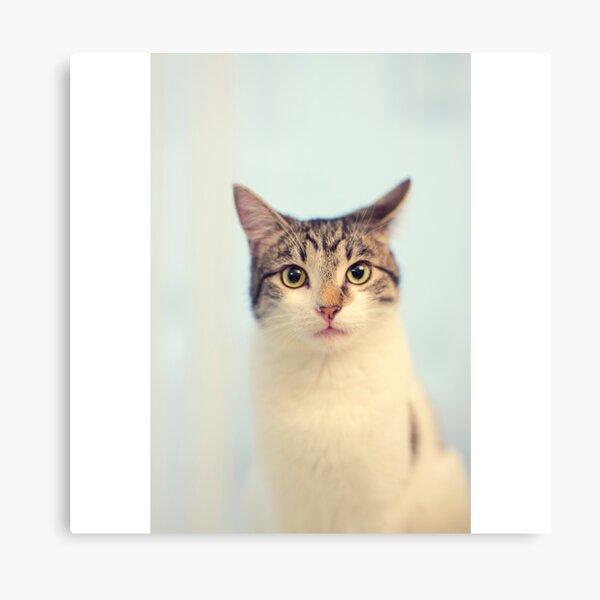 Kitty Cat Portrait Canvas Print