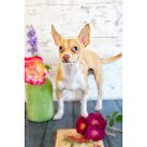 Chihuahua Puppy Poses with Roses by Susan Gary