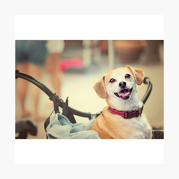 Terrier Dog in Bicycle Basket Photographic Print