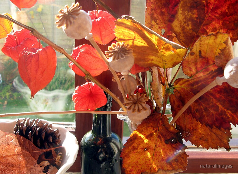 Autumn Still life by naturalimages