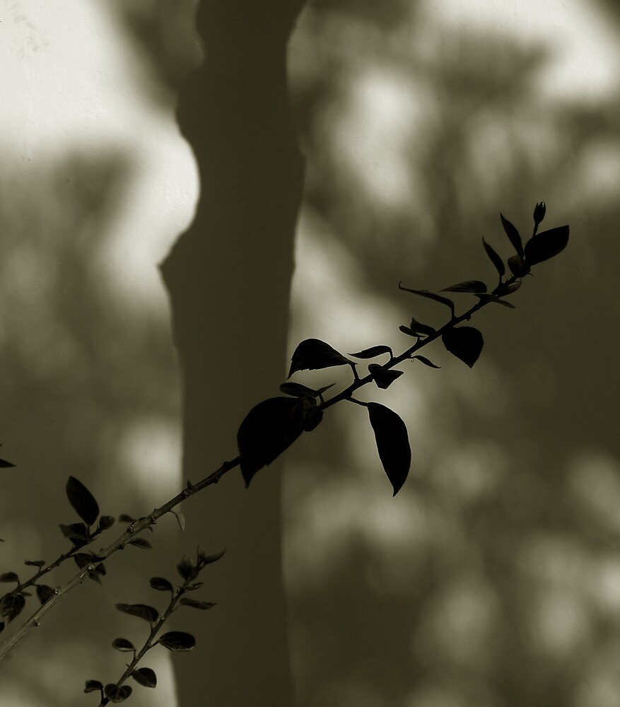 tree and leaves by ragman