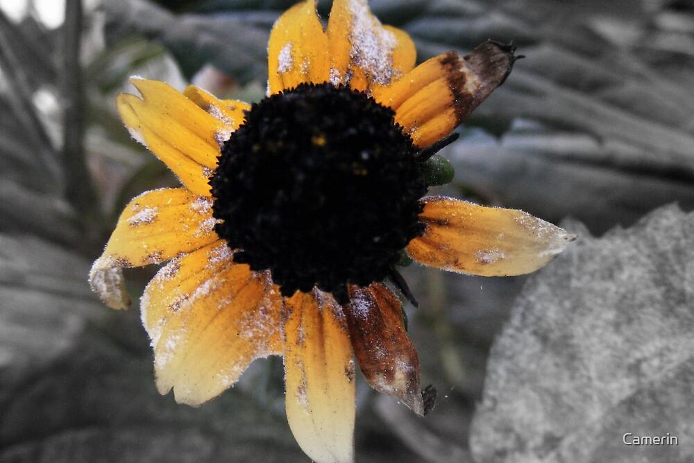 FLOWER DEMISE by Camerin