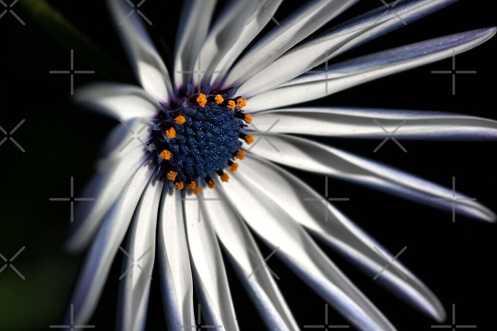 Brighten your Day - Daisy by Joy Watson