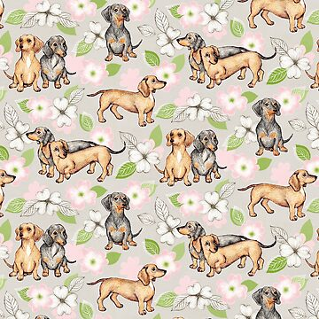 Dachshunds and Dogwood Blossoms by micklyn