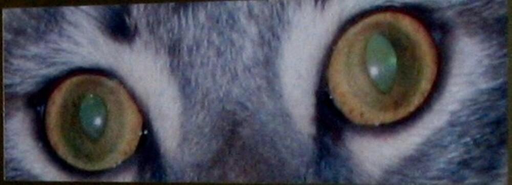 Cat Eyes by Magnoliadorn