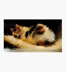 Beautiful Dreamer- Calico cat napping Photographic Print
