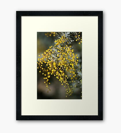 Natures Lace Framed Print