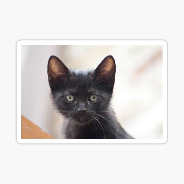 black kitten portrait Sticker