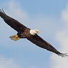 Eagle September 2017 by Deborah  Benoit