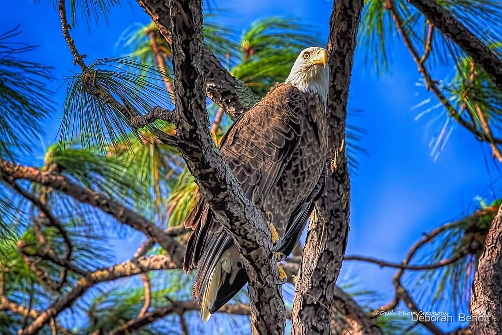 Eagle Series In The Tree by Deborah  Benoit
