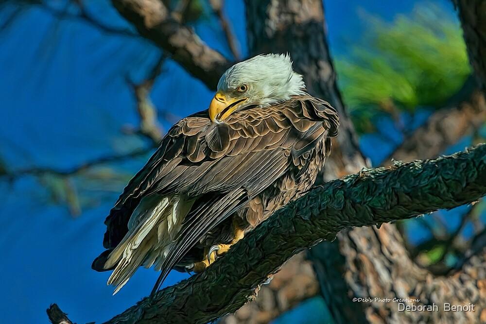 Eagle Series Preening by Deborah  Benoit