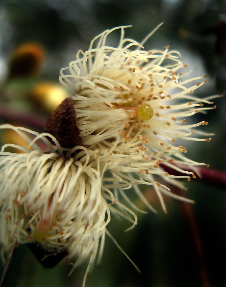 gumflower by SarahTrangmar